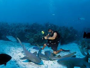 man diving with sharks