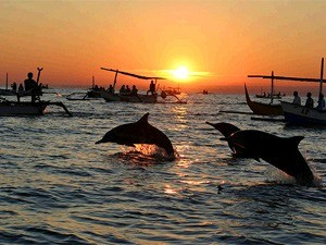 dolphins jumping at sunrise in indonesia