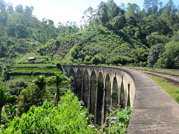 train tracks in green jungle in sri lanka