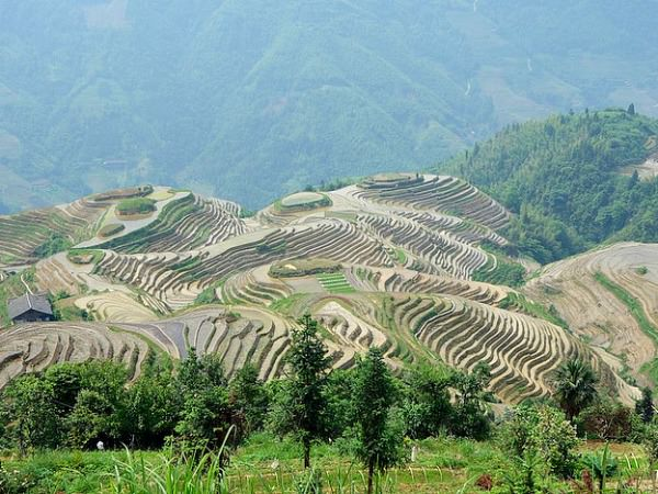 terraced rice paddies in china