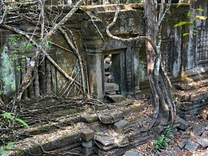 trees growing over temples at angkor wat in cambodia