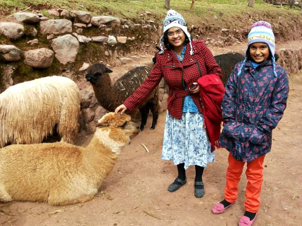 customers with llamas in peru