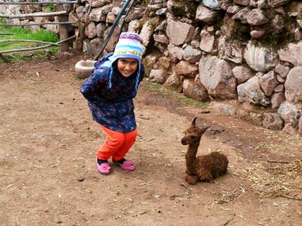 girl with baby llama in peru