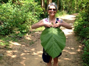 customer holding teak leaf