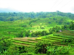 indonesia-ubud-rice-paddies-by-ester