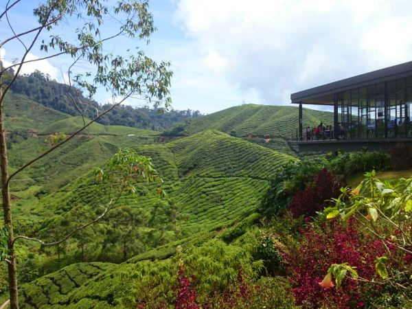 Restaurant overlooking the Cameron Highlands