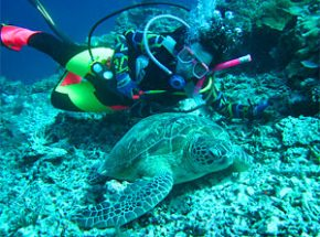 Person snorkelling with turtles in Malaysia
