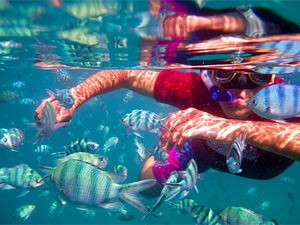 Person snorkelling amongst colourful fish in Malaysia