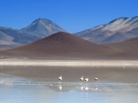 A view across the Bolivia Salt Flats with birds bathing in the water