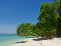 View across a white sandy beach with trees hanging over the water's edge in Borneo