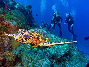People diving in Fernando in Brazil with a sea turtle