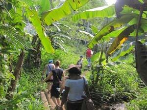 Baracoa national park and jungle