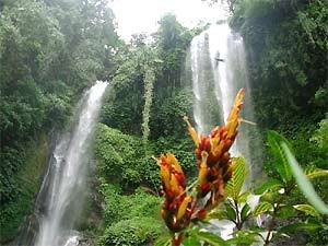 Waterfall with flower