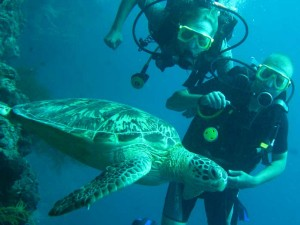 Diving with turtles in Malaysia