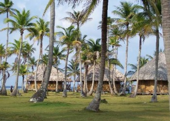 cabanas and palm trees