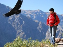 Person watching a condor fly in Peru