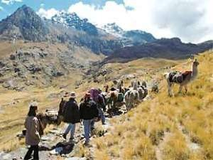 Customers on their trekking tour with lamas in Peru