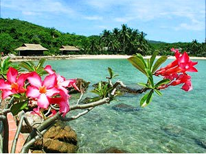Pink flowers draping over the turquoise waters of Palm Island in Vietnam