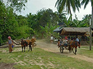 Horse and cart outside a traditional Cambodian homestay