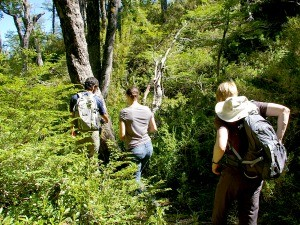 People hiking through greenery
