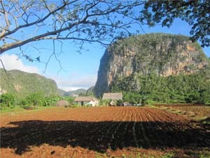dusty fields in vinales, Cuba
