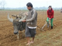 Vietnam Hue customer ploughing field with local farmer and buffalo