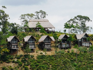 Thatched roof hotel huts in green hillside