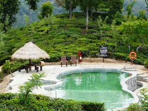 Hotel outdoor pool in jungle