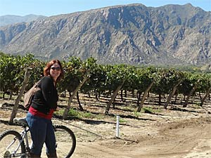 Customer cycling through the vineyards in argentina