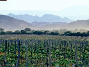 iSalud! On the Wine route