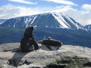 Seals lying on top of rocks