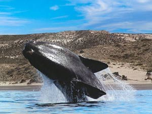 Puerto Madryn, wildlife tour to Peninsula Valdés