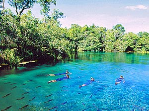 Snorkeling in the Sucuri River, near Bonito in Brazil