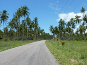 Palm trees and road in Brazil