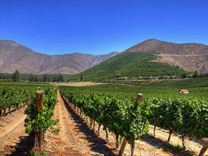 Vineyards with mountain backdrop