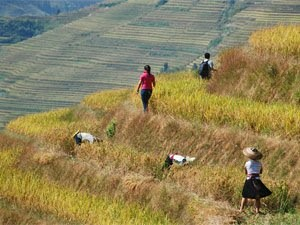 Rice Terraces and Zhuang Villages