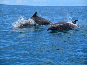 Dolphin spotting & snorkelling
