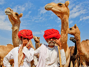 Local men with camels in the desert in India