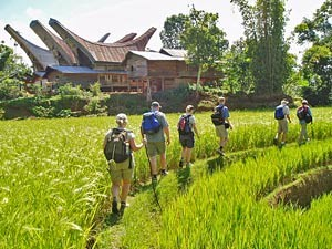 Group trekking in rice paddies