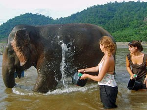 Woman helping to wash an elephant in the river in Laos