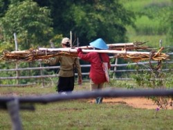 local women carrying wood
