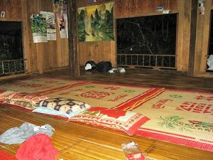 roosts on the floor