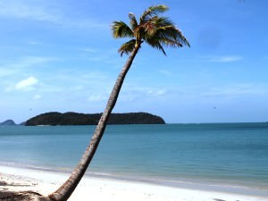 Swaying palm tree on the beach overlooking the sea