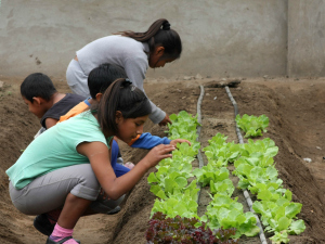 local children gardening