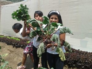 local children growing vegetables