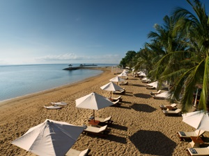 Umbrellas and lounge chairs along beach with palm trees