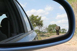 elephant in driving mirror
