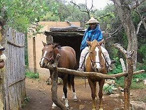 local man with two horses in Lesotho