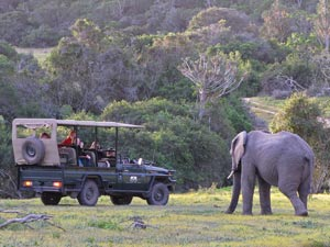 jeep and elephant
