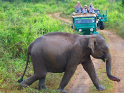 Elephant walking in a national park